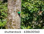 side view of male quetzal... | Shutterstock . vector #638630560