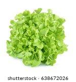 oak leaf lettuce isolated on... | Shutterstock . vector #638672026