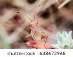 Small photo of Bug Alydus calcaratus on a plant