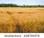a barley corn field in germany... | Shutterstock . vector #638704474