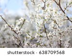 perfect spring flowers. white... | Shutterstock . vector #638709568
