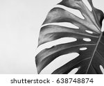 close up of the monstera leaf.... | Shutterstock . vector #638748874