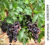 black grape | Shutterstock . vector #638803099