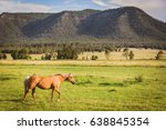 Small photo of Horse ina field in hunter valley, Australia