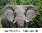 african elephant 1 | Shutterstock . vector #638863228