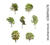 Small photo of Isolated trees collection on white background include Sugar palm tree, Rubber tree and Fig tree