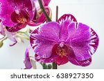 pink phalaenopsis orchid | Shutterstock . vector #638927350