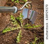 Small photo of Garden Hoe With Weed In Ground In Garden Close Up. Struggle Weeds.