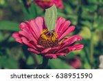butterfly on flower | Shutterstock . vector #638951590