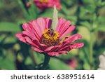 butterfly on flower | Shutterstock . vector #638951614