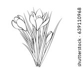 hand drawn crocus flowers.... | Shutterstock .eps vector #639110968
