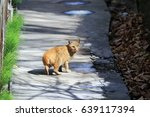 a cat standing on the pathway... | Shutterstock . vector #639117394