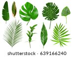 Stock photo different tropical leaves on white background 639166240