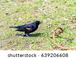Male Red Winged Blackbird On...
