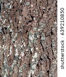 Small photo of Alder tree bark surface texture close up as background