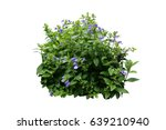 flower bush tree isolated with... | Shutterstock . vector #639210940