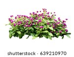 Flower Bush Tree Isolated With...
