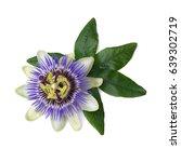 Stock photo passiflora passionflower isolated on white background big beautiful flower 639302719