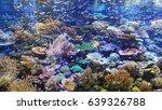 aquarium tank colorful coral | Shutterstock . vector #639326788