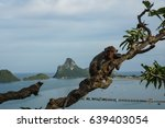 monkey on the tree with the sea ... | Shutterstock . vector #639403054