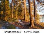 warm evening sunlight in forest | Shutterstock . vector #639436006