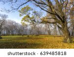 beautiful outdoor autumn forest ... | Shutterstock . vector #639485818