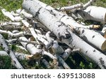 Logs Of Birch.