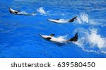 dolphin playing in water with... | Shutterstock . vector #639580450