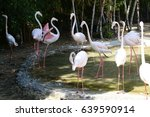 flamingos live in the zoo | Shutterstock . vector #639590914