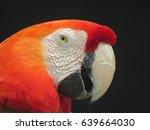 parrot   Shutterstock . vector #639664030