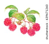 raspberry with red berries and... | Shutterstock . vector #639671260