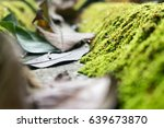 green moss on the roof tile ... | Shutterstock . vector #639673870