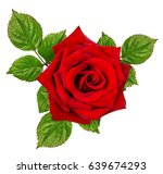 rose isolated on the white... | Shutterstock . vector #639674293