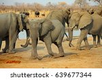 Small photo of Large herd of African Elephants (African Loxodonta), surrounding a waterhole in Hwange National Park, Zimbabwe Southern Africa