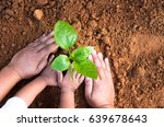kid hand and father planting...   Shutterstock . vector #639678643