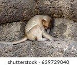 Cute Baby Monkey Sleep Under...