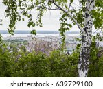 birch and blooming lilacs in... | Shutterstock . vector #639729100