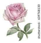 Stock photo watercolor light pink rose 639768130