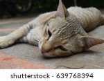 beautiful cat sleeping cutey | Shutterstock . vector #639768394