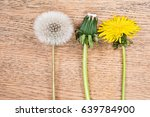 Three Dandelions In Different...