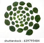 green leaves arranged in spiral ... | Shutterstock . vector #639795484