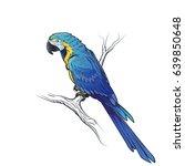 blue macaw parrot ara...   Shutterstock .eps vector #639850648