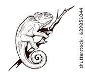 chameleon on a branch... | Shutterstock .eps vector #639851044