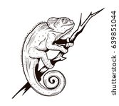 chameleon on a branch...
