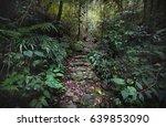 Stone Path In The Jungle...