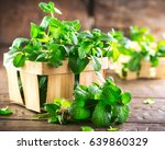 mint. bunch of fresh green... | Shutterstock . vector #639860329