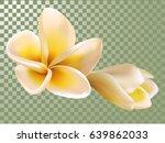 plumeria or frangipani flower... | Shutterstock .eps vector #639862033