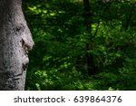 old man in the tree looking at... | Shutterstock . vector #639864376