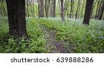a woodland trail through a...
