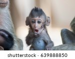 cute monkeys a cute monkey... | Shutterstock . vector #639888850